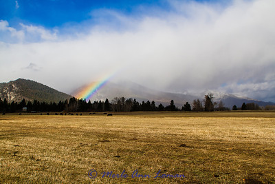 Rainbows in the Bitterroot
