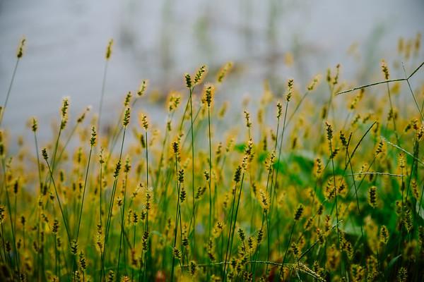 2018-10-08 - Meadowlands