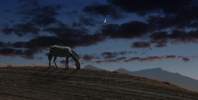 zebra-night.jpg
