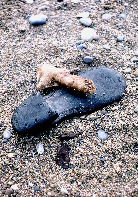 shoe beach.jpg