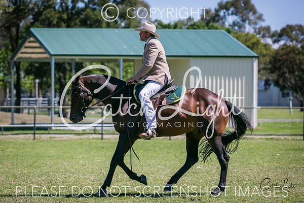 410a Heritage Stock Horse Over 15hh