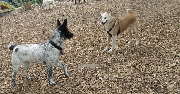 FOXY (new), MURPHY (pup)