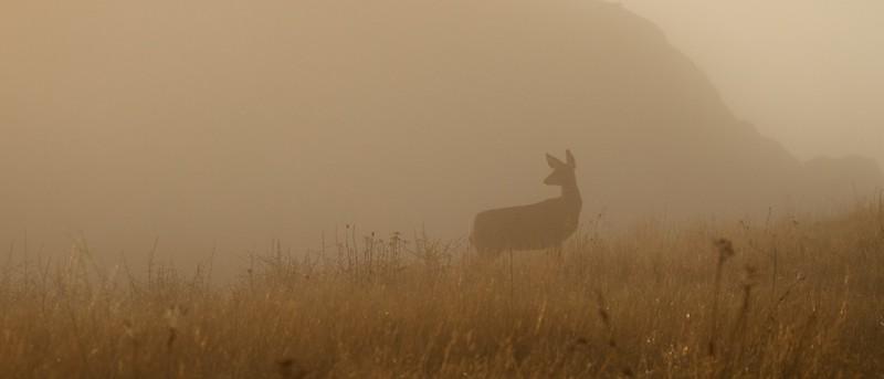 Mule Deer Teddy Roosevelt National Park Medora ND IMG_6229.jpg