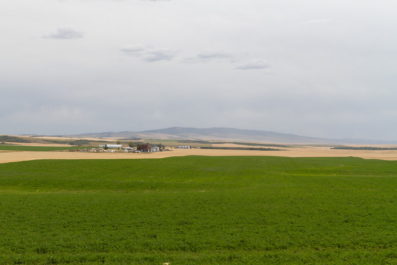 Continuing south, we encountered some serious agriculture in the rolling foothills - alfalfa
