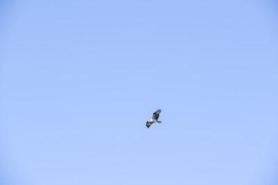 Sunset Bird Rookery Kayak Tour - Bledsoe & Siegel