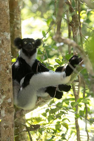 Madagascar_2013_FH0T9553.jpg