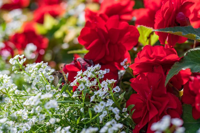 Don Egan's Flowers -104.jpg