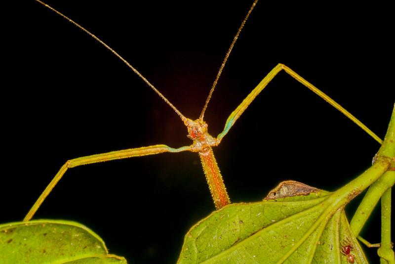 Biodiversity Group, IMGP7913