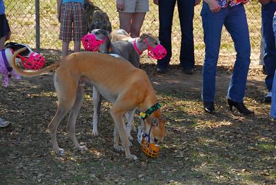 Greyhound Playdate 16MAR08