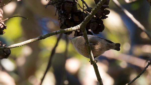 San Francisco Bird Image Library