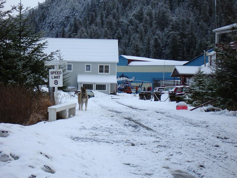 Alaska 2008 147.jpg