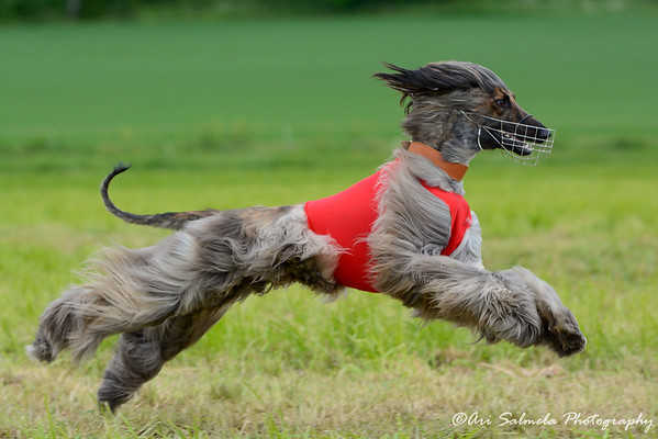 Mustiala Coursing 2014