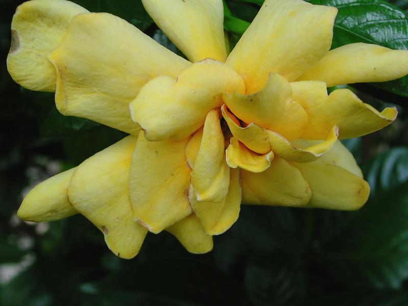 lakefloral33.JPG