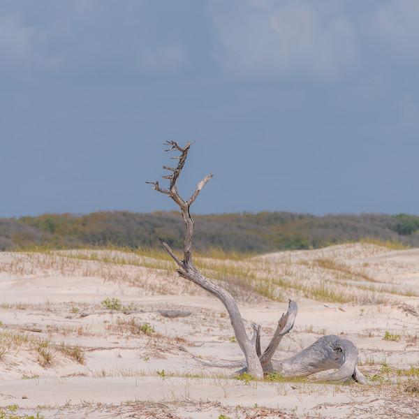 Jekyll Island-0924.jpg