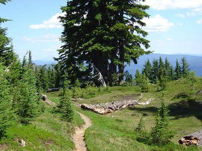 Diamond Peak Wilderness 07/05