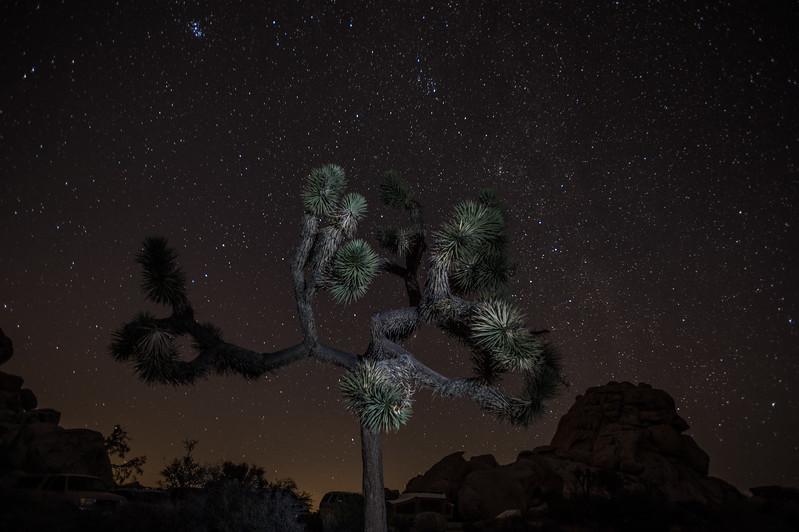 Joshua Tree 18.jpg
