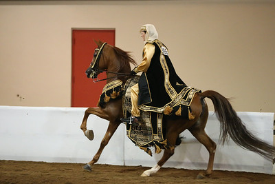 112 156 Arabian Mounted Native  Costume ATR