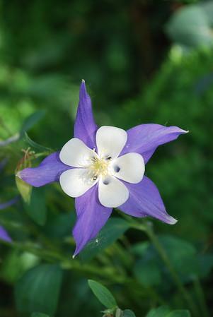 2008-06-07 Flowers