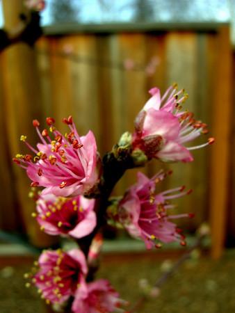 3720 Spring Flowers