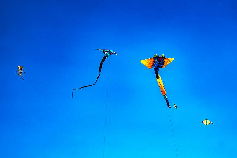 milwaukee-kite-festival_47947148847_o.jpg