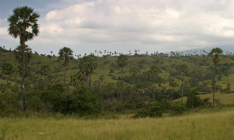 IN343-Rinca#landscape.JPG
