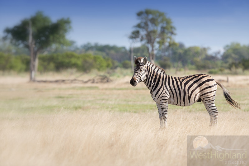 Botswana-20121201-6033-Edit.jpg