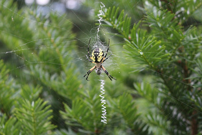Spider August 2014