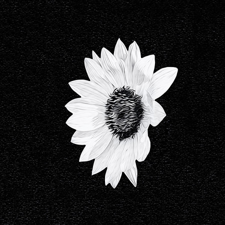 Black and White, Sepia, Other Monotones
