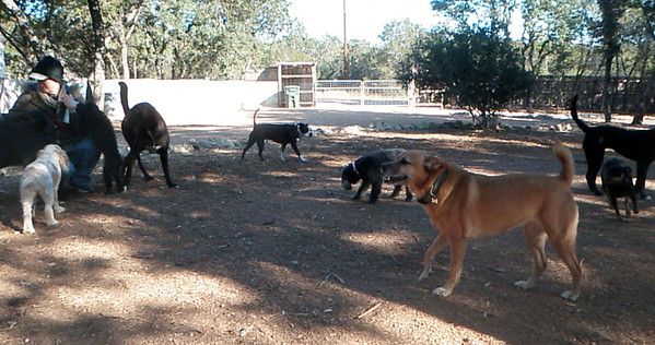 December 2012 A to Z Dog Ranch