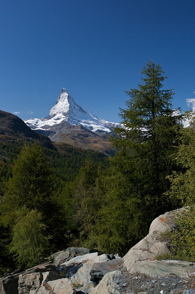 Matterhorn and Larch Trees