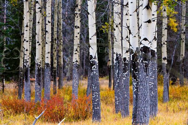 Alberta: Wildrose Country