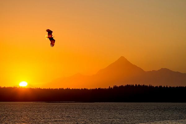 Alaska_Wildlife