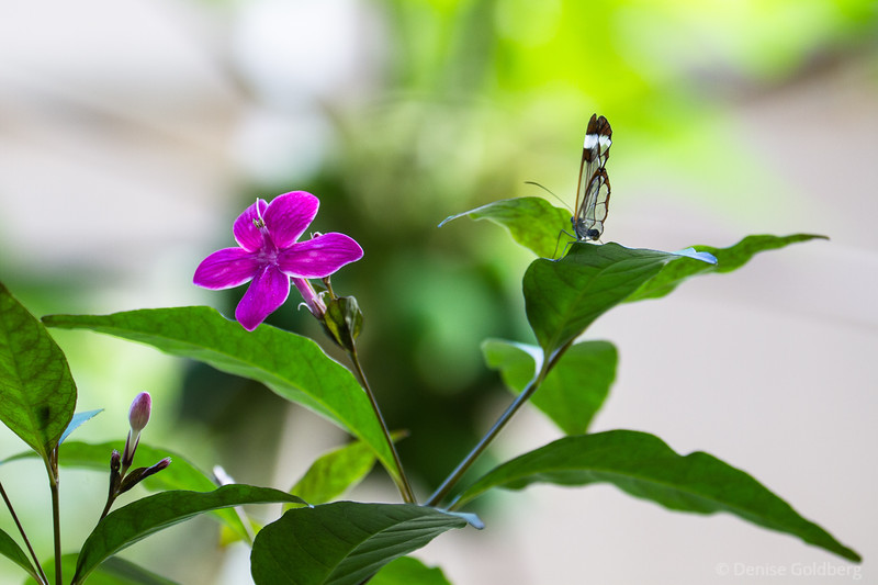 delicate... a flower and a butterfly