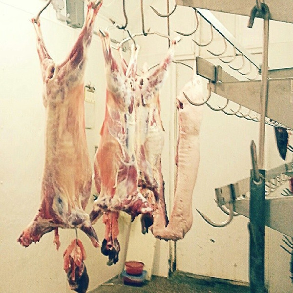 Arrived_at_small_abattoir_to_shoot_a_video_of_a_pig_slaughter._It_will_be_difficult_to_watch_but_I_think_important_as_a_meat_eater..jpg