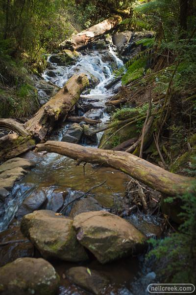 creek151010-036.jpg
