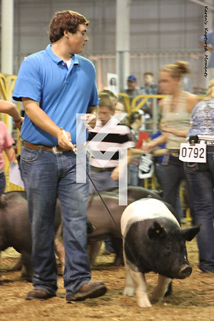 4-H Pigs - NSR breeds