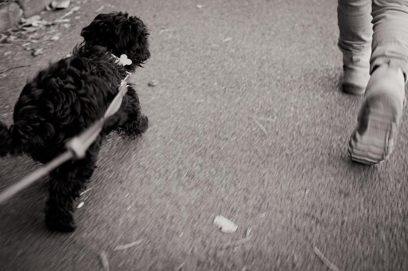 leena-puppy-walk-geox-fujifilm-x100s-tclx100-24.jpg