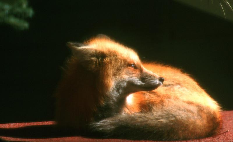 fox19.jpg
