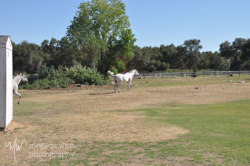 EB&Horses-113.jpg