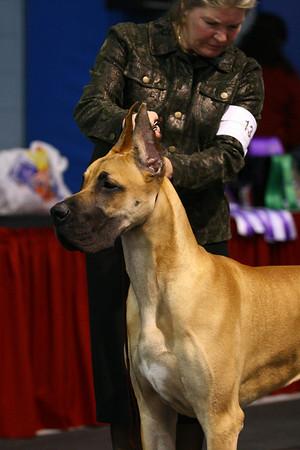 9-12 Puppy Dog