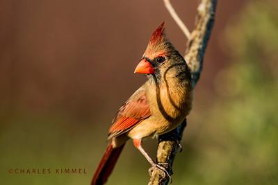 Cardinal: 2019