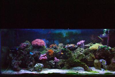 My aquarium Oct 2006