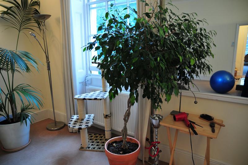 TreeMoving-06.jpg