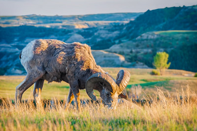 Animals of the Badlands