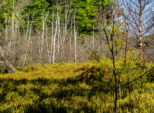 Wisconsin woods slideshow