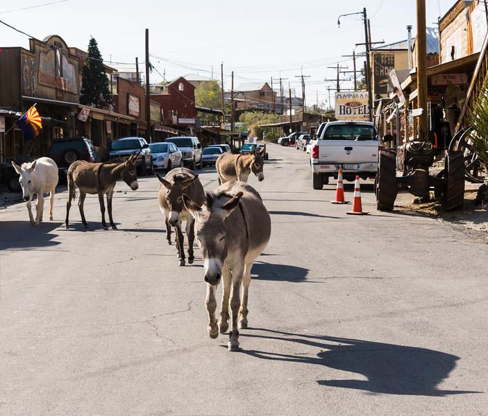 Wild Burros on Main Street in Oatman, Arizona