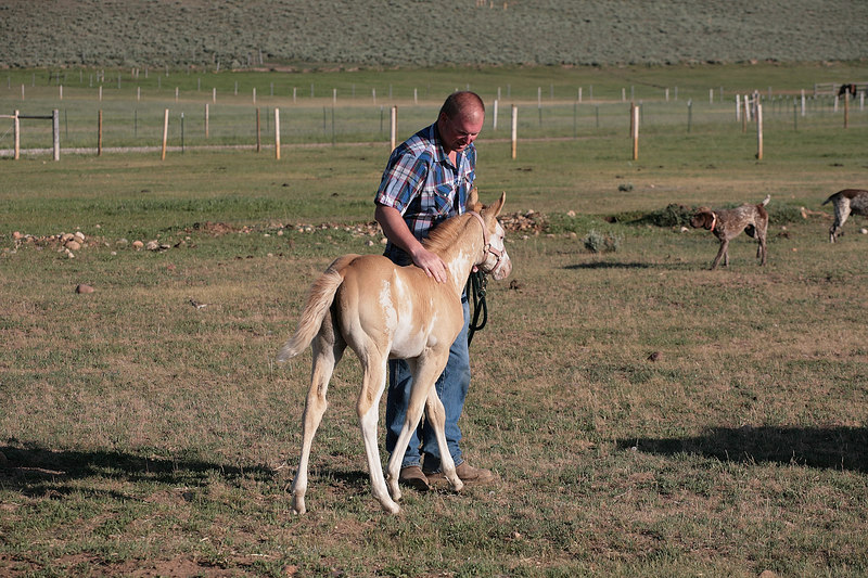 My brother-in-law's mare had this filly within the last few months.  It seemed to like both of the kids.