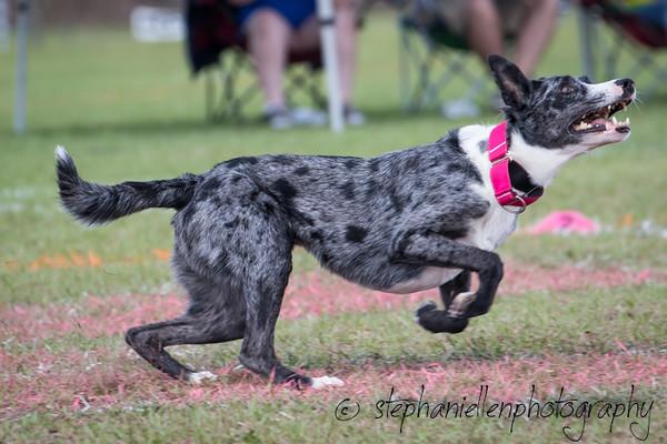 _MG_3189Up_dog_International_2016_StephaniellenPhotography.jpg