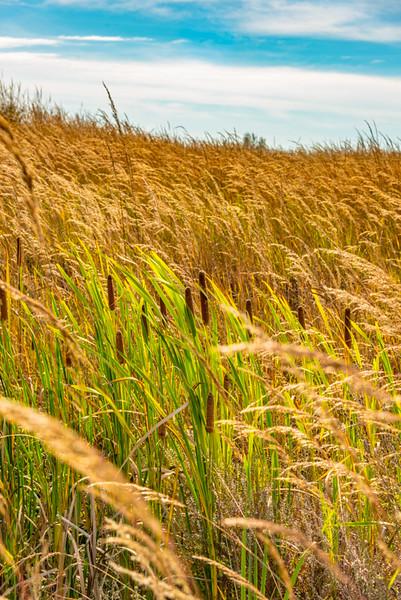 Prairie  67
