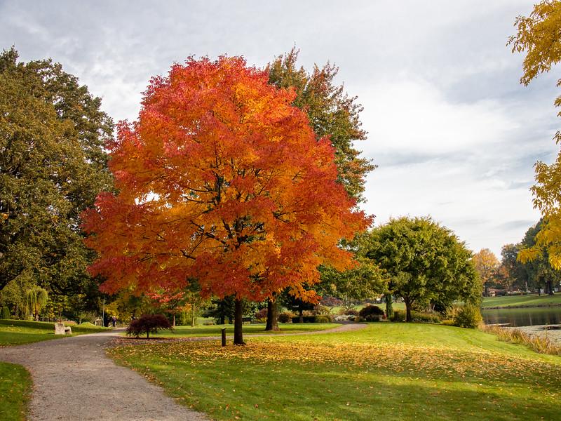 White Oak, Lake Sacajawea, Longview, WA IMG_0503.jpg